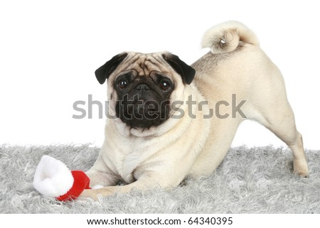 Pug puppy with Santa christmas hat - stock photo