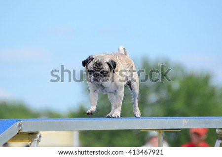 Pug Running on a Dog Walk at an Agility Trial - stock photo