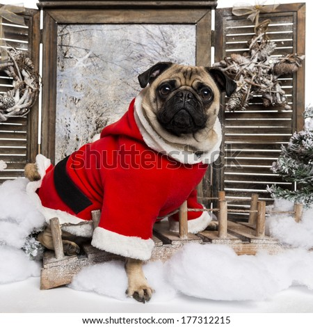 Pug wearing a christmas suit sitting in a winter scenery, 3 years old - stock photo