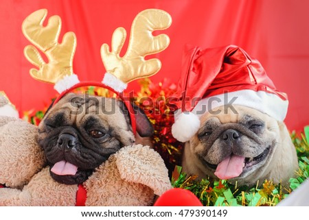 Pug wearing a headband reindeer and Santa Claus hat in Christmas festival .