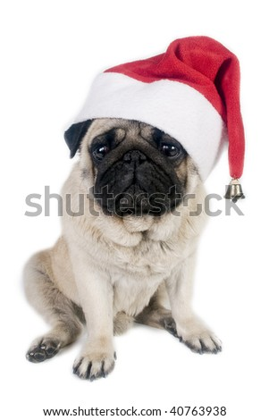 Pug wearing a santa hat. - stock photo
