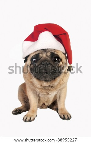 Pug wearing a santa hat. - stock photo