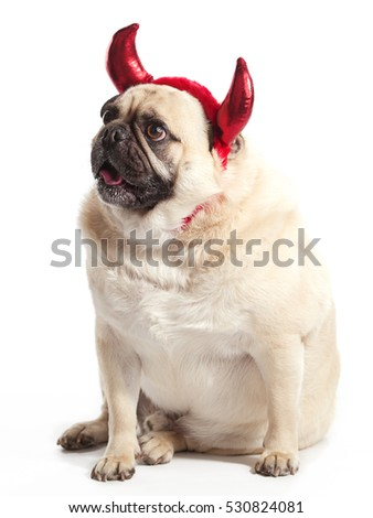 Pug with devil horns isolated on white background