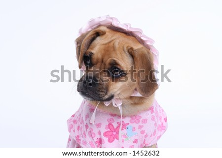 puggle puppy in pink dress with bonnet - stock photo