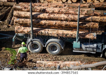 PUKEKOHI, NZ - APRIL 22: Stacked wooden logs, tree trunks on a logging truck on April 22, 2014. Forestry is New Zealand third largest export earner with international sales in excess of $4 billion.
