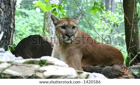vxtorp cougar women Download 66 cartoon cougar illustrations vector only stock footage older woman fotosearch enhanced rf royalty free.