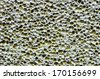 Pumice stone surface background or texture - stock photo