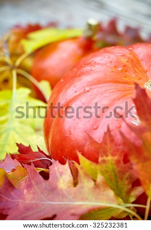 pumpkin and squash in an autumn garden with colorful golden foliage on the trees standing on an old wooden table with red and yellow fall leaves, with copyspace - stock photo