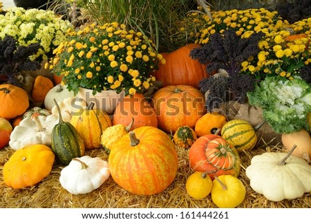 pumpkin and squash in the harvest season