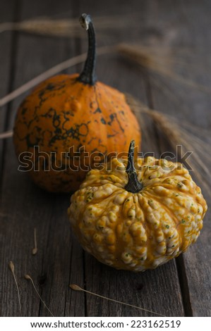 Pumpkin and wheat Autumn decoration - stock photo