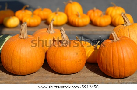 Pumpkin Array II