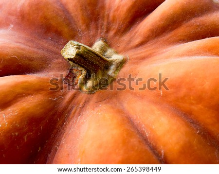 Pumpkin background. - stock photo