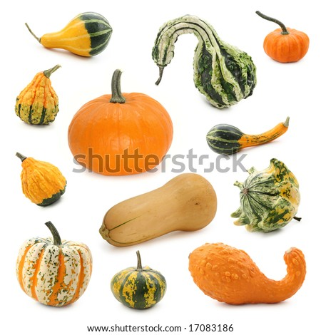 Pumpkin collection isolated on white background - stock photo