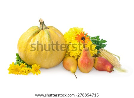 Pumpkin, corn, pears and chrysanthemums on a white background. The harvest season - stock photo