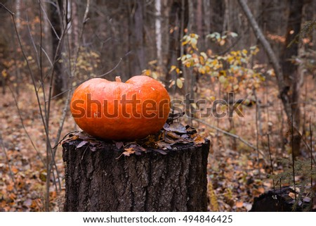 Pumpkin for Halloween on the stump in autumn forest