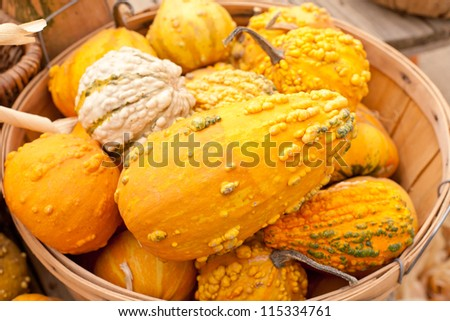 Pumpkin gourds