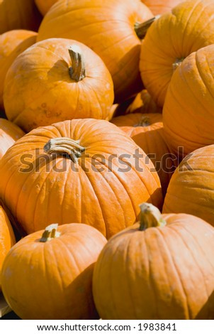 Pumpkin Halloween Thanksgiving background 41