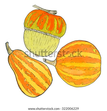 Pumpkin. Hand-drawn three different pumpkins. Halloween and Thanksgiving day. Real watercolor drawing.  - stock photo