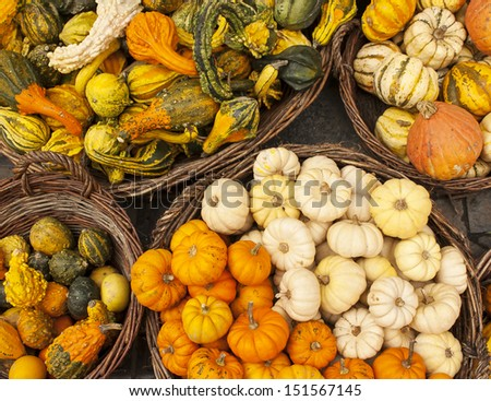 Pumpkin harvest - stock photo