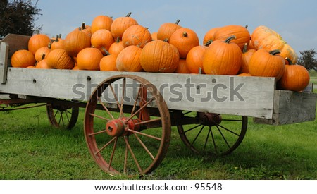 Pumpkin Haul - stock photo