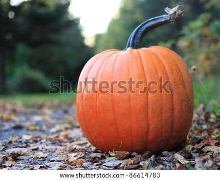 Pumpkin on a deserted road - stock photo