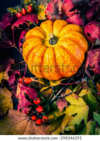pumpkin on autumn leaves, close up, toned - stock photo