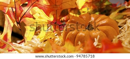 Pumpkin on bed of fall leaves - stock photo
