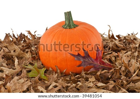 Pumpkin on Fallen Oak Leaves Isolated on White - stock photo