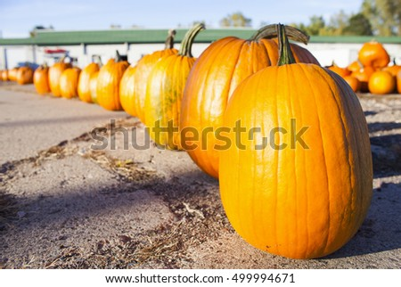 Pumpkin on sale