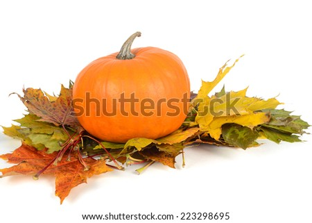 Pumpkin on the maple leaves - stock photo