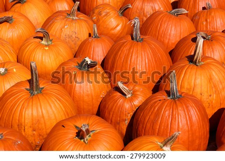 pumpkin patch for Autumn season at market place - stock photo