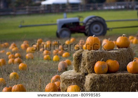 Pumpkin patch on a farm in Oregon - stock photo