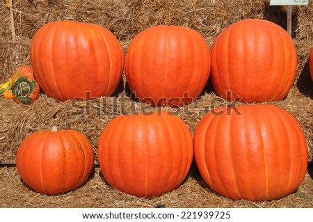 Pumpkin Patch selling decorative gourds and Jack o Lanterns in the Fall - stock photo
