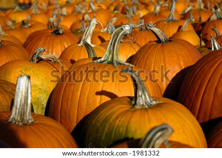 pumpkin perspective horizontal - stock photo
