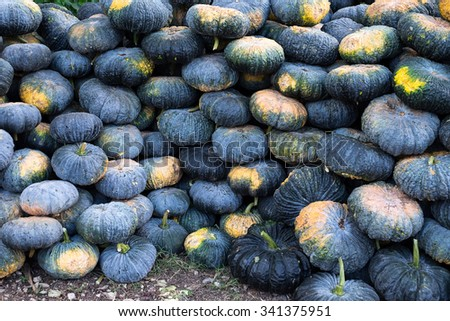 Pumpkin pile.