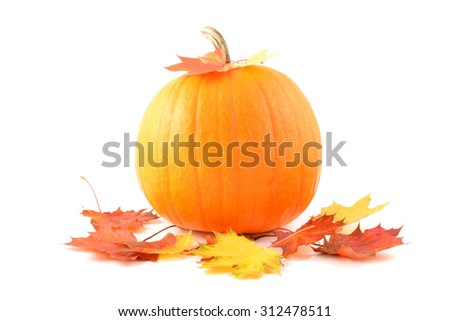 Pumpkin. Pumpkin isolated on white. autumn leaves with pumpkin on white background, decoration. Pumpkin vegetables.  - stock photo