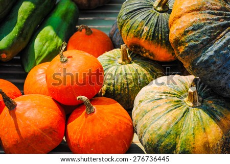 Pumpkin vegetables from the garden in the countryside. - stock photo