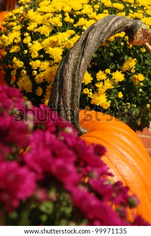 pumpkin with mum flowers