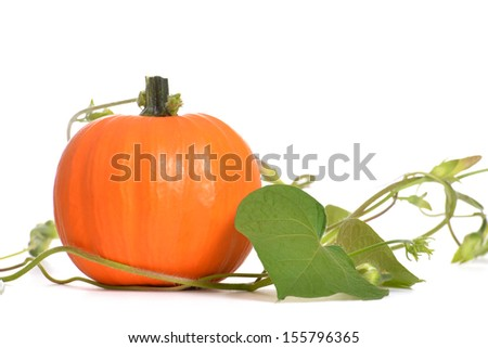 pumpkin with vine isolated on white background - stock photo