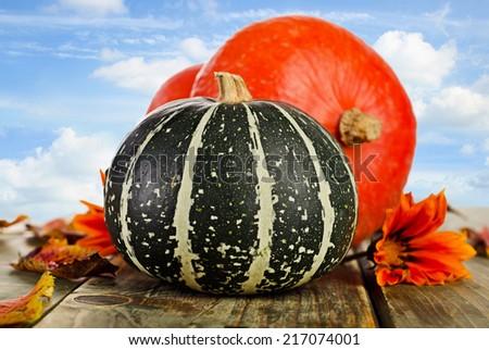 Pumpkins against blue sky. Selective focus  - stock photo