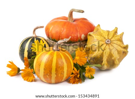 pumpkins and a calendula flower on a white background
