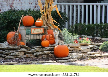 Pumpkins and a cat on decorative rocks - stock photo