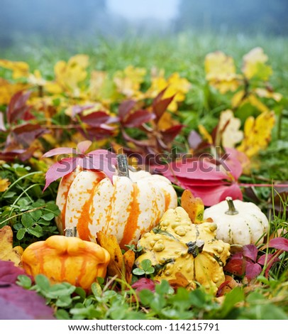 pumpkins and autumn foliage in grass - stock photo