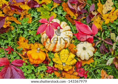 pumpkins and autumn foliage in grass outdoor - stock photo