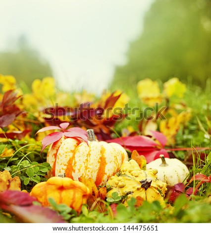 pumpkins and autumn foliage in grass - still life - stock photo
