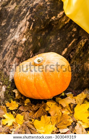 pumpkins and autumn leaves, Autumn in the park