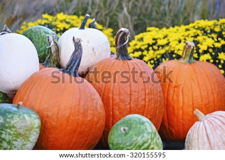 Pumpkins and gourds and Autumn foods on display - stock photo