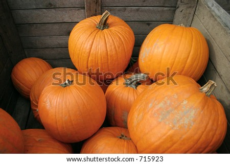 Pumpkins and Pumpkins