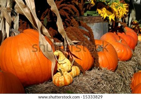 Pumpkins and squash in Peacham Vermont - stock photo