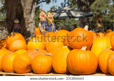 pumpkins and three scarecrows - stock photo